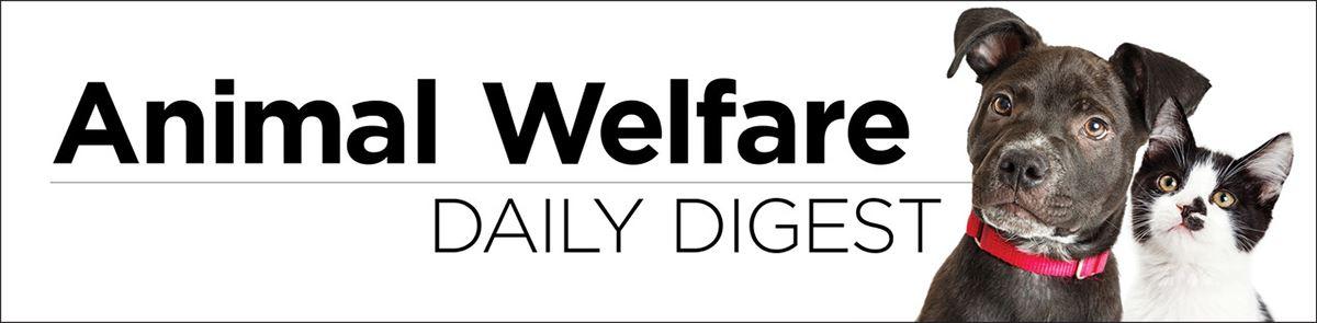 daily digest logo